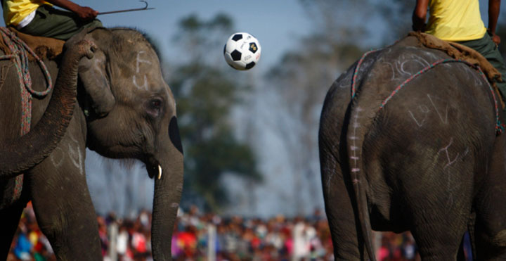 elephant polo, elephant football, animal game in nepal, incredible nepal, interesting animal football