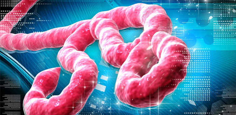 most dangerous virus, ebola virus, ebola virus in nepal, world dangerous virus